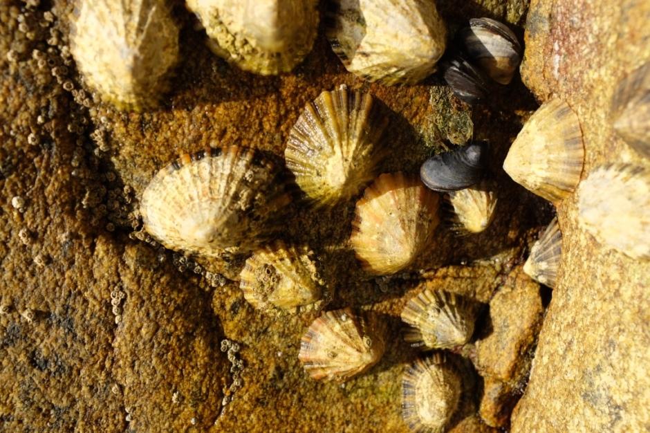 brest, shells