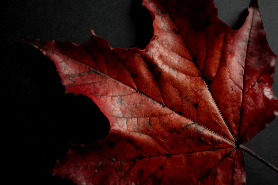 autumn, fall, red leaves