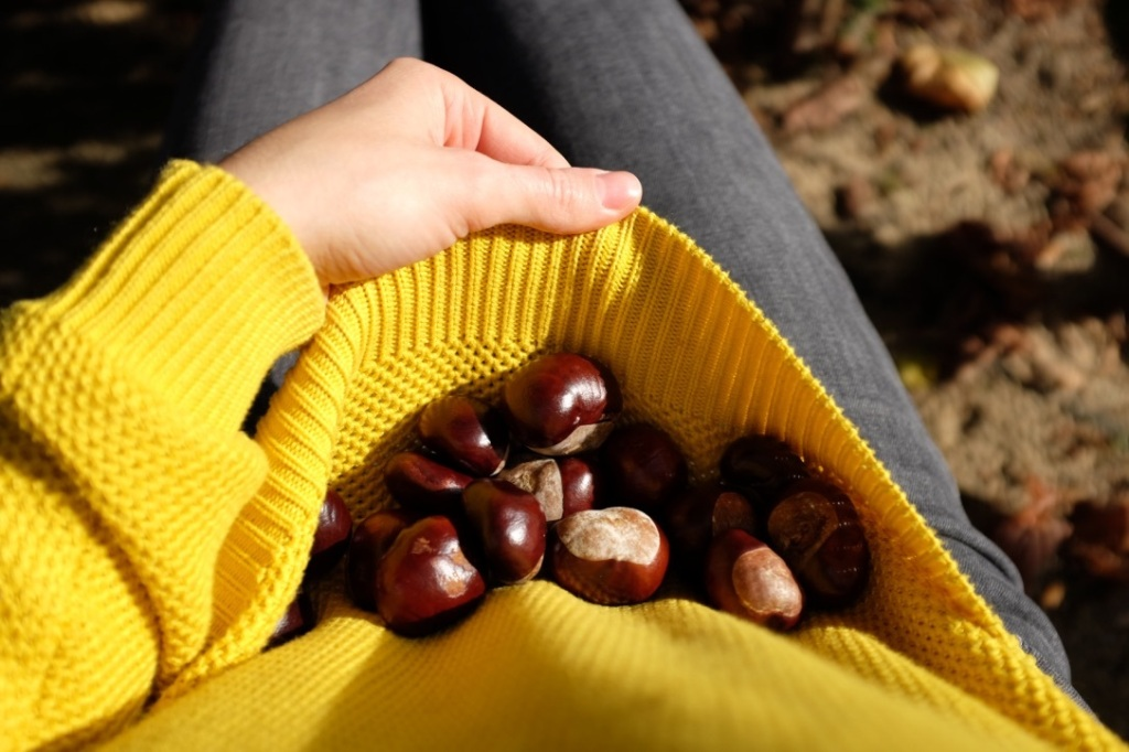 autumn, fall, chestnuts